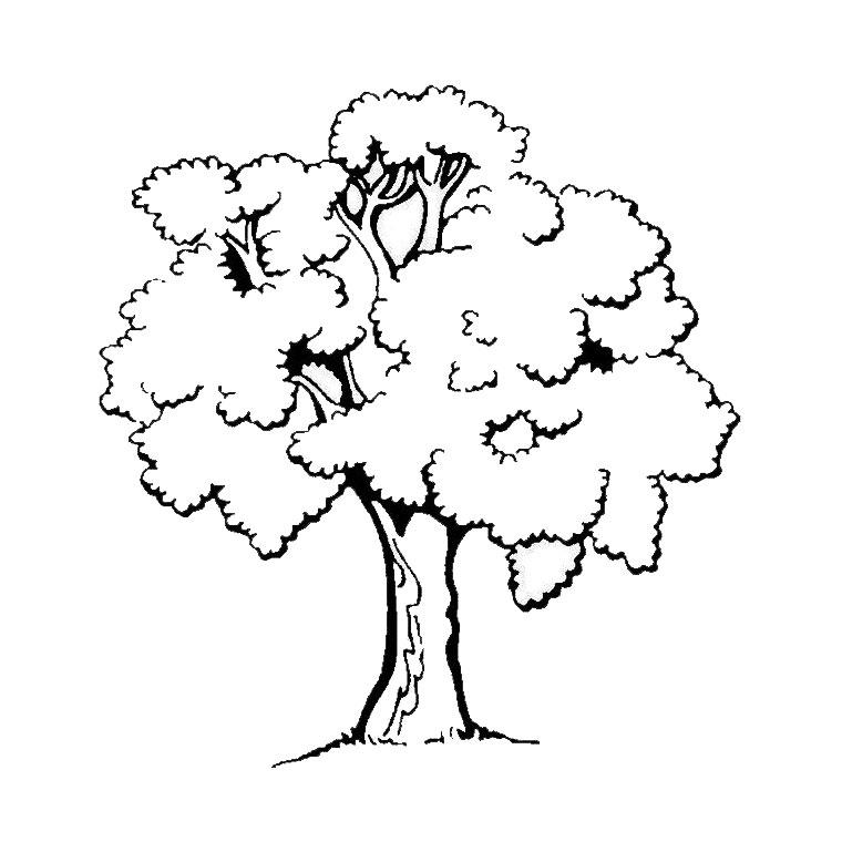 coloriage arbre 3 coloriage d 39 arbres coloriages pour enfants. Black Bedroom Furniture Sets. Home Design Ideas