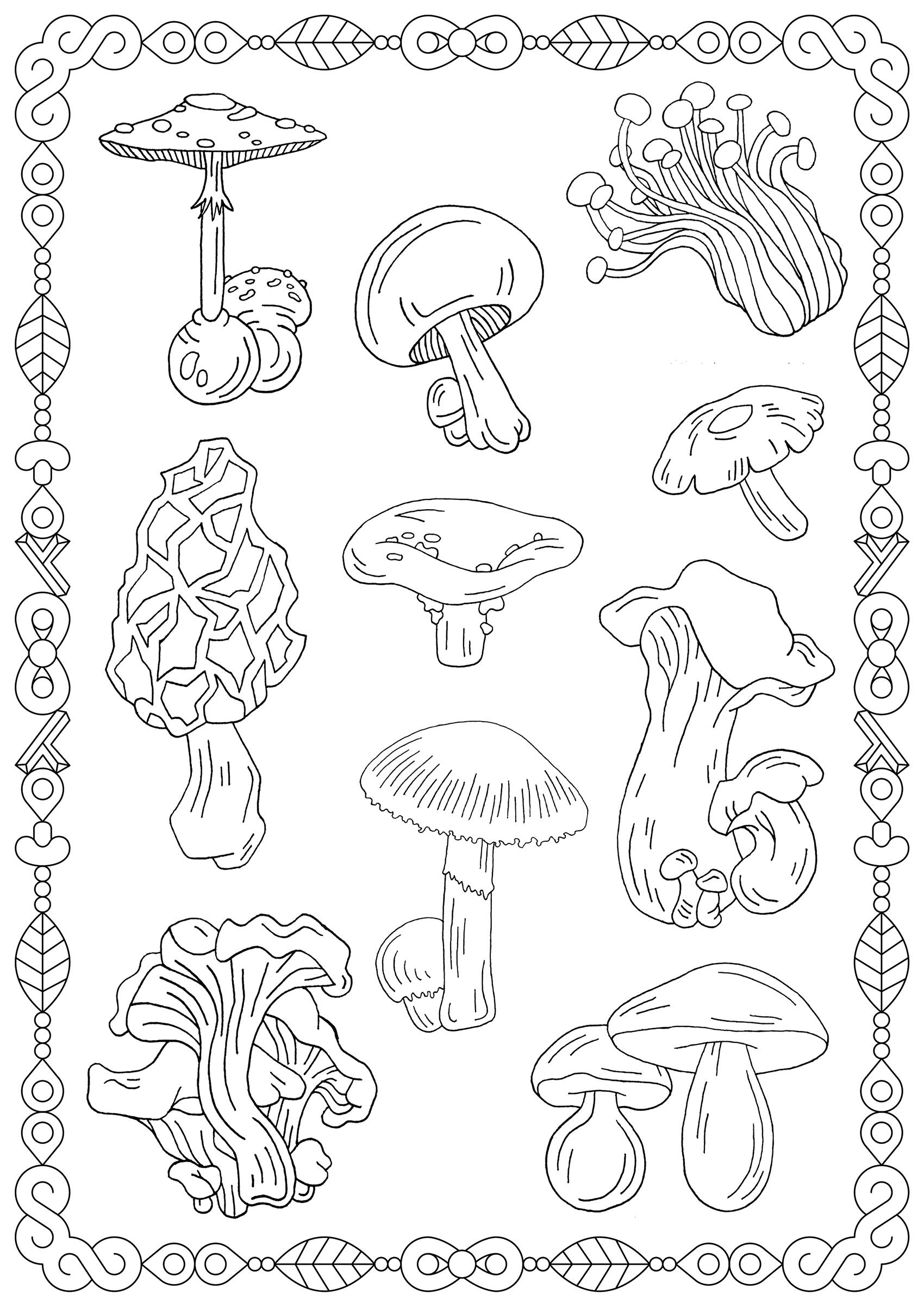 Coloriez ces différentes espèces de champignons, et le joli cadre qui les entoure
