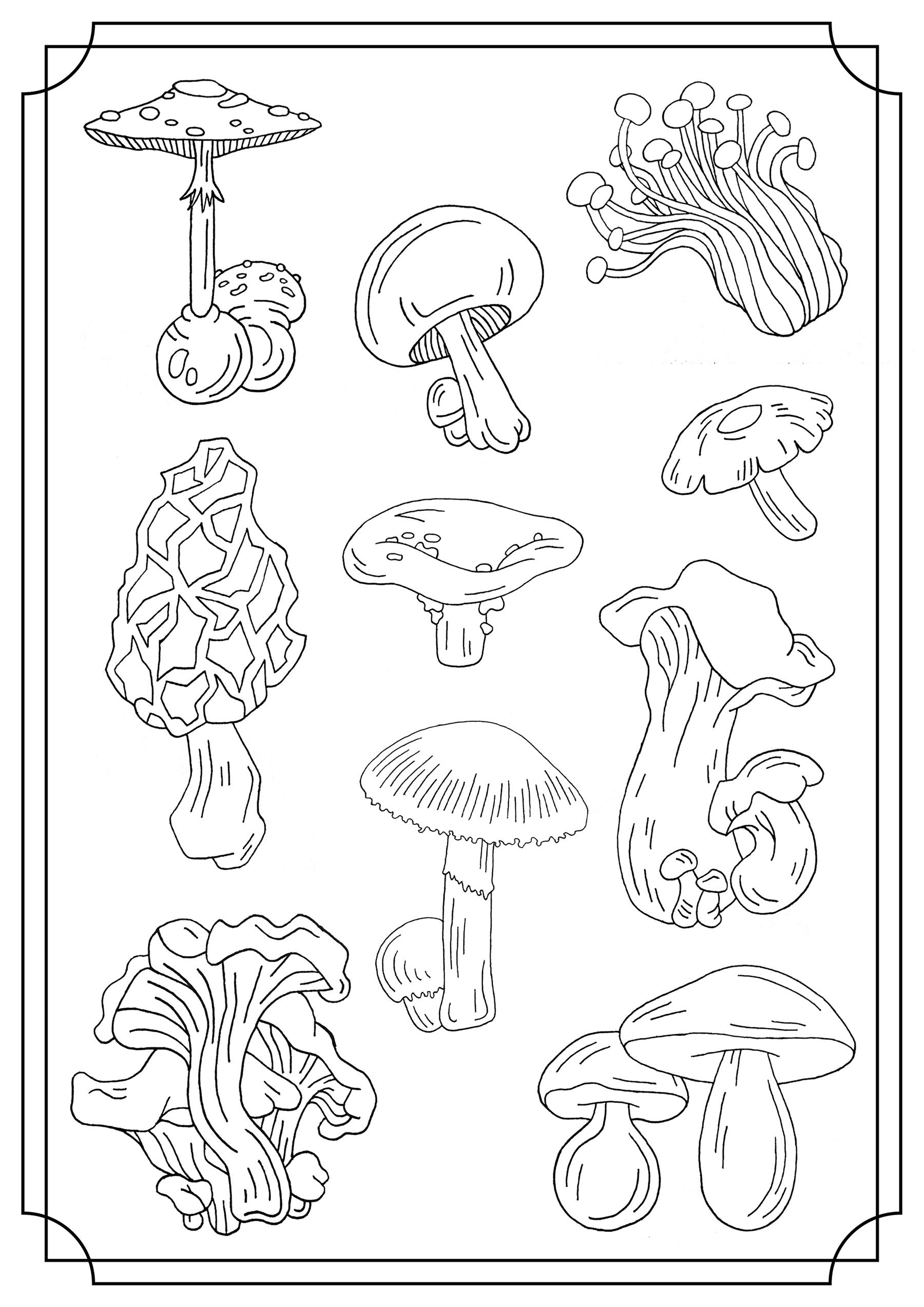Coloriez ces sortes espèces de champignons