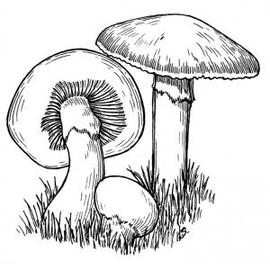 Dessin de champignon gratuit à télécharger et colorier
