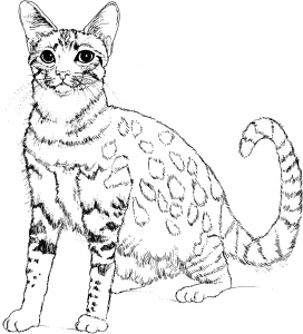Coloriage chat free to print