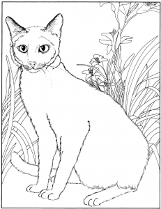Coloriage chatte free to print