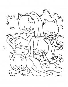 Coloriage de chat à colorier pour enfants