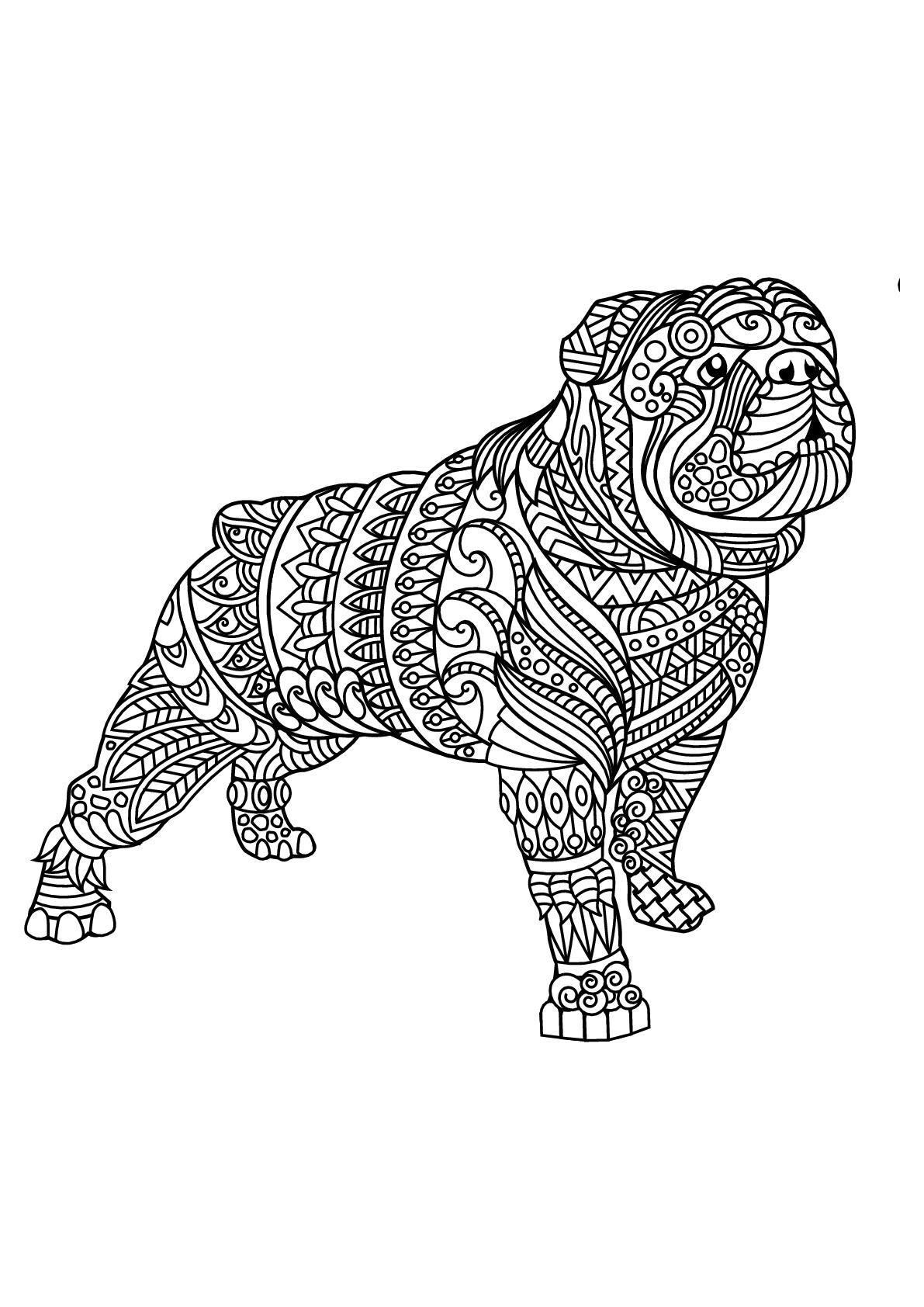 Bulldog, avec motifs harmonieux et complexes