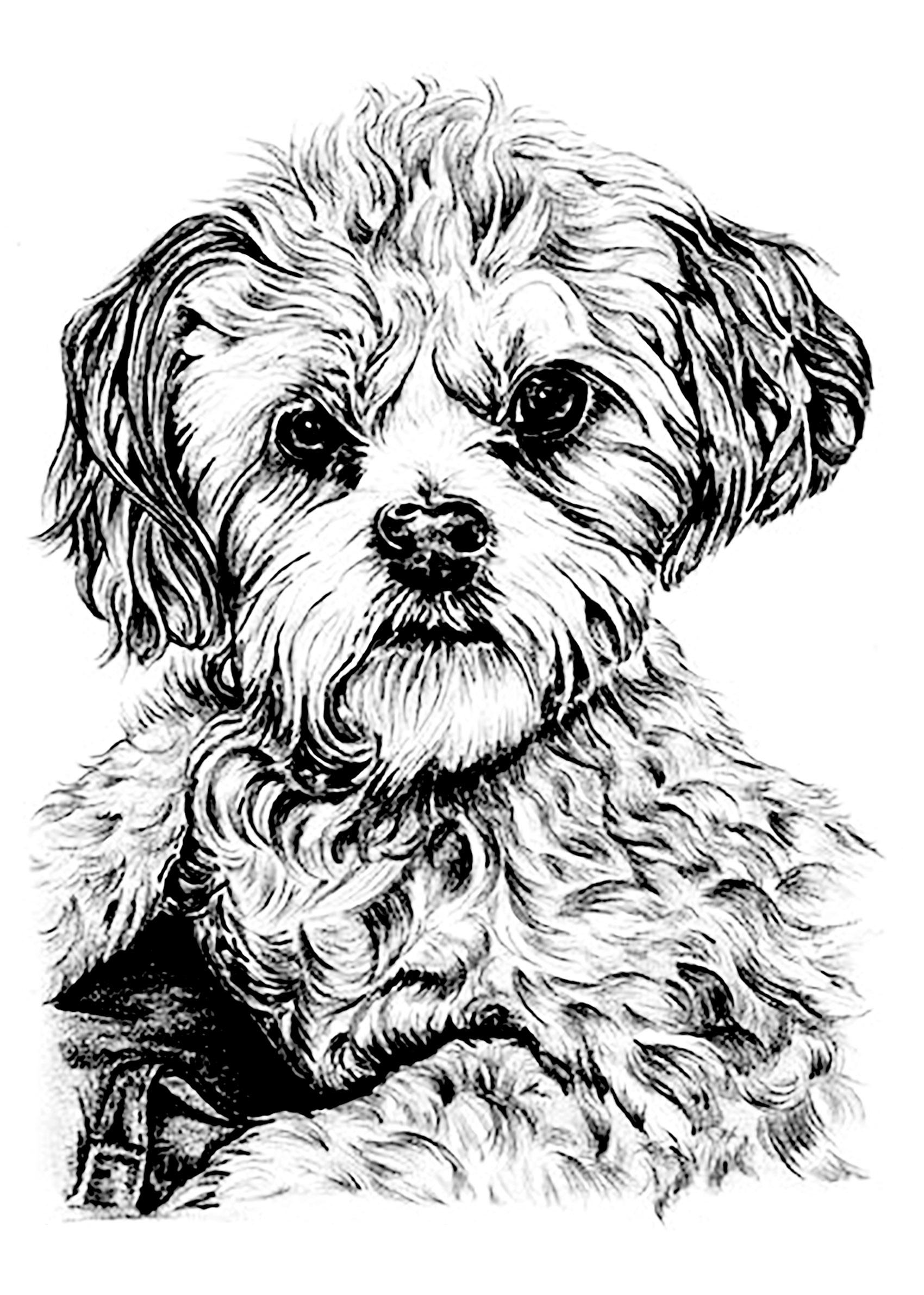 Portrait de chien coloriages de chiens coloriages pour - Dessiner un yorkshire ...