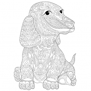 A imprimer chiens 3 coloriages de chiens coloriages - Dessin teckel ...