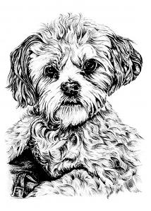 coloriage portrait de chien