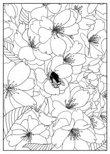 Coloriage pour adulte difficile cerisier par mizu gratuit a imprimer