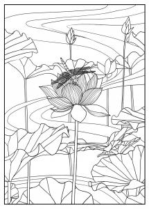 Coloriage pour adulte difficile lotus par mizu gratuit a imprimer