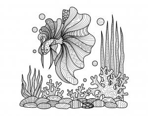 Coloriage pour adulte difficile zentangle poisson sur coraux par bimdeedee gratuit a imprimer