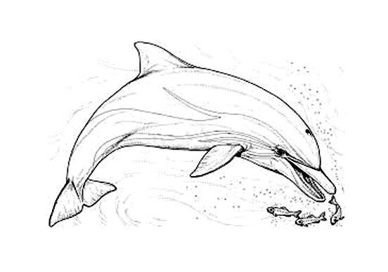 image dauphin colorier a partir de la galerie dauphins - Dauphin A Imprimer
