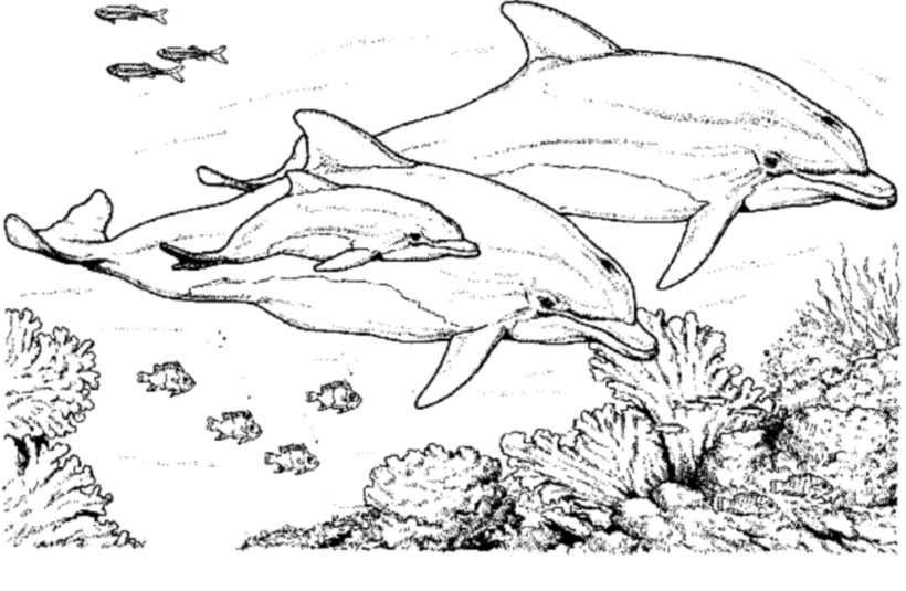coloriage de dauphin a imprimer