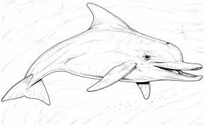 Coloriage de dauphin à colorier pour enfants