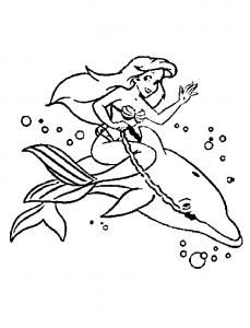 Coloriage de dauphin à imprimer gratuitement