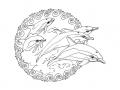 Coloriage de dauphin à telecharger gratuitement