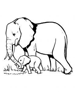 Coloriage d'eléphant à télécharger gratuitement