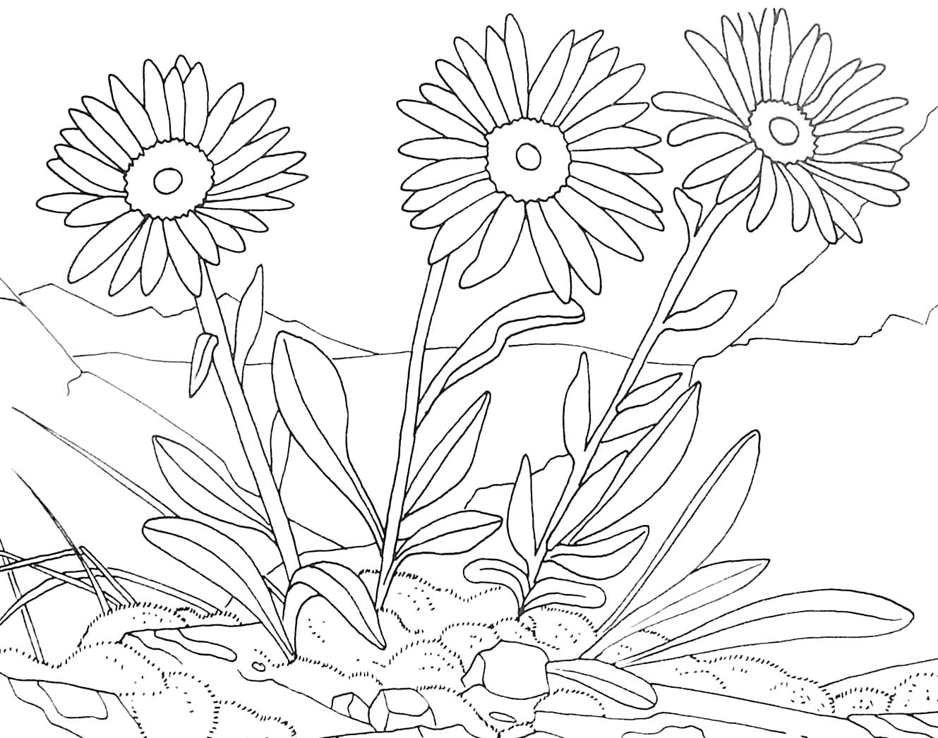 fleurs 6 coloriage de fleurs coloriages pour enfants. Black Bedroom Furniture Sets. Home Design Ideas