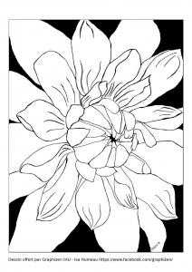 Coloriage fleur magnifique petales par graphizen