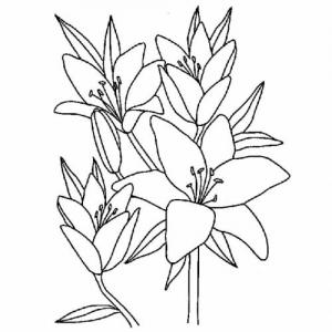 Dessin de Fleurs gratuit à imprimer et colorier