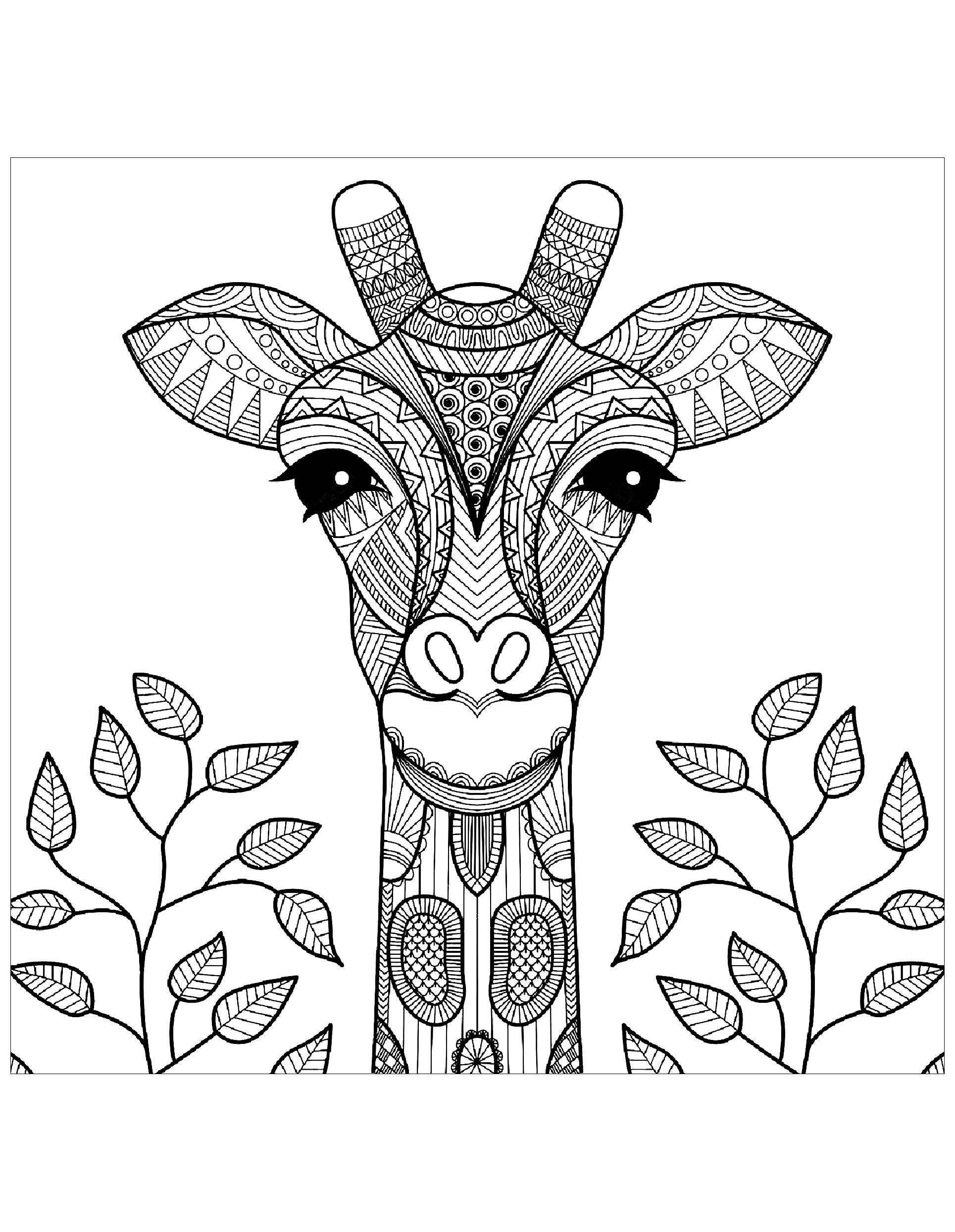 Gratuit tete de girafe et feuilles coloriage de girafes coloriages pour enfants - Feuille de coloriage gratuit ...