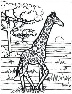 Girafe qui court