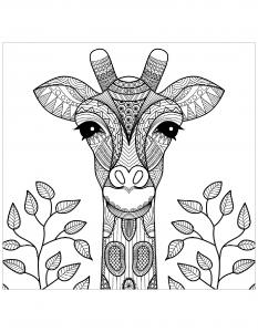 Coloriage gratuit tete de girafe et feuilles