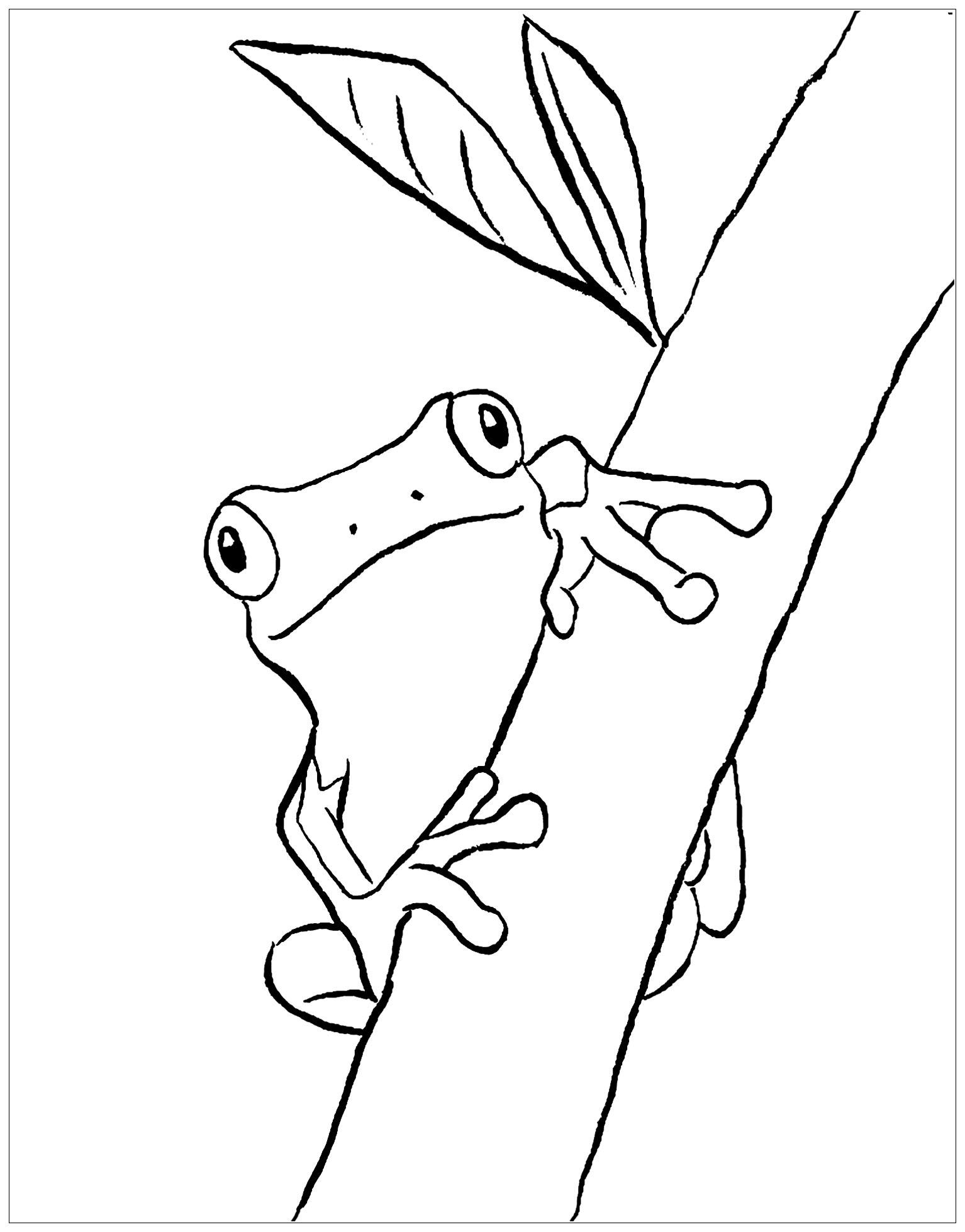 Dessin de grenouille gratuit à imprimer et colorier - Coloriage de