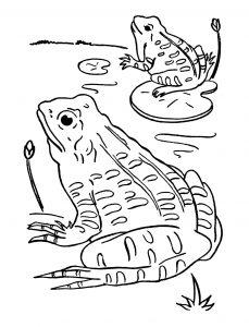 Coloriage de grenouille à telecharger gratuitement