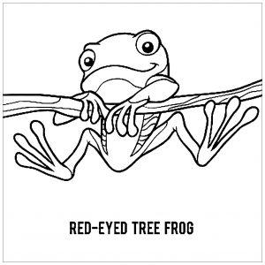 Coloriage enfant grenouilles 7