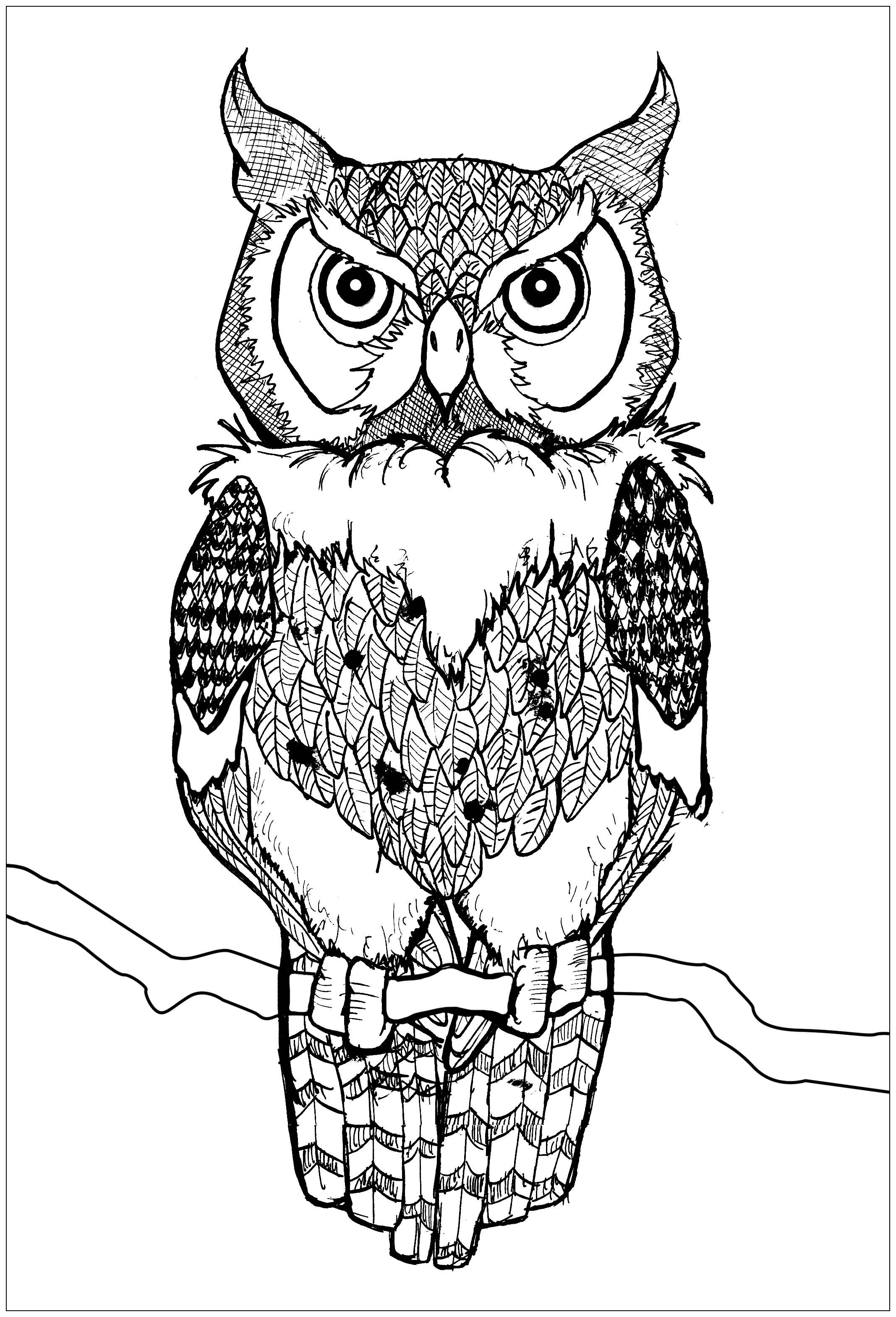 Joli hibou yeux percants coloriage de hiboux coloriages pour enfants - Coloriage de hibou ...