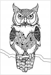 Coloriage joli hibou yeux percants