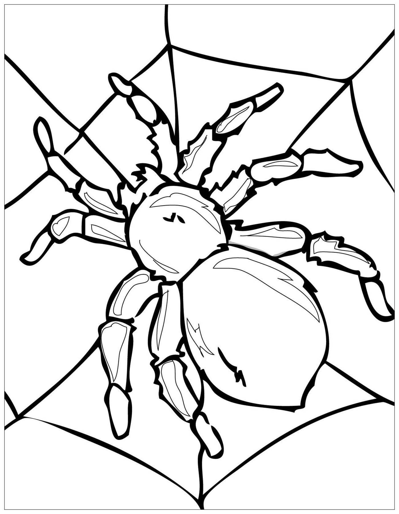 Une grosse araignée sur sa toile !