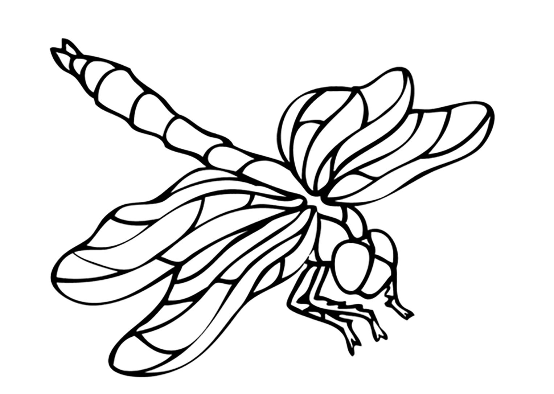 Cette jolie libellule a besoin de couleurs !