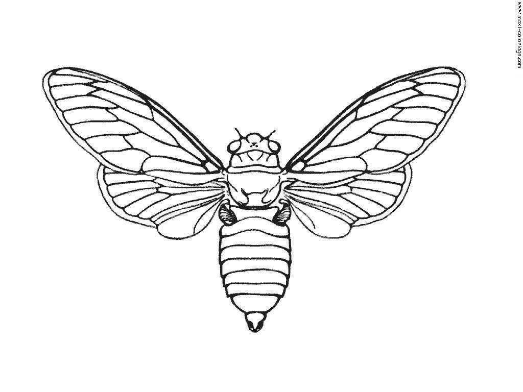 Coloriage Papillon Et Abeille.Insectes 7 Coloriage D Insectes Fourmis Araignees Abeilles