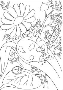 Coccinelles et fleurs