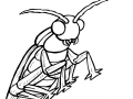 Coloriage insectes 3