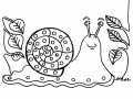 Coloriage insectes escargot 1