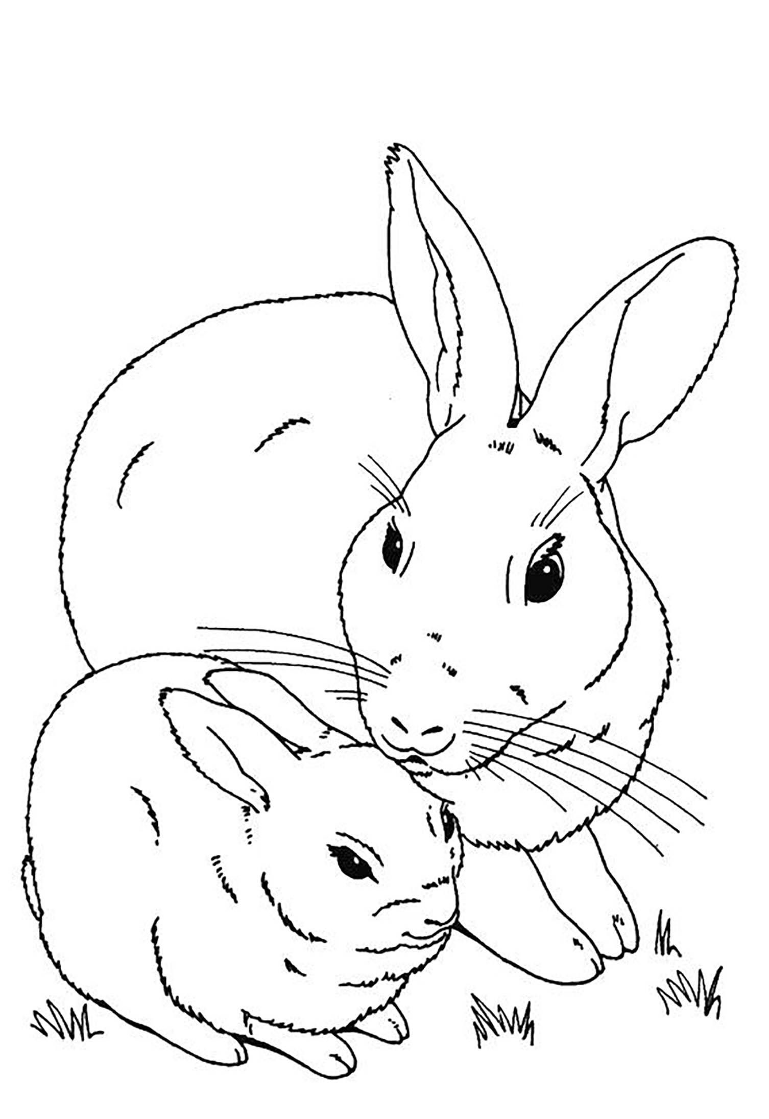 Lapin 13 - Coloriage de lapins - Coloriages pour enfants