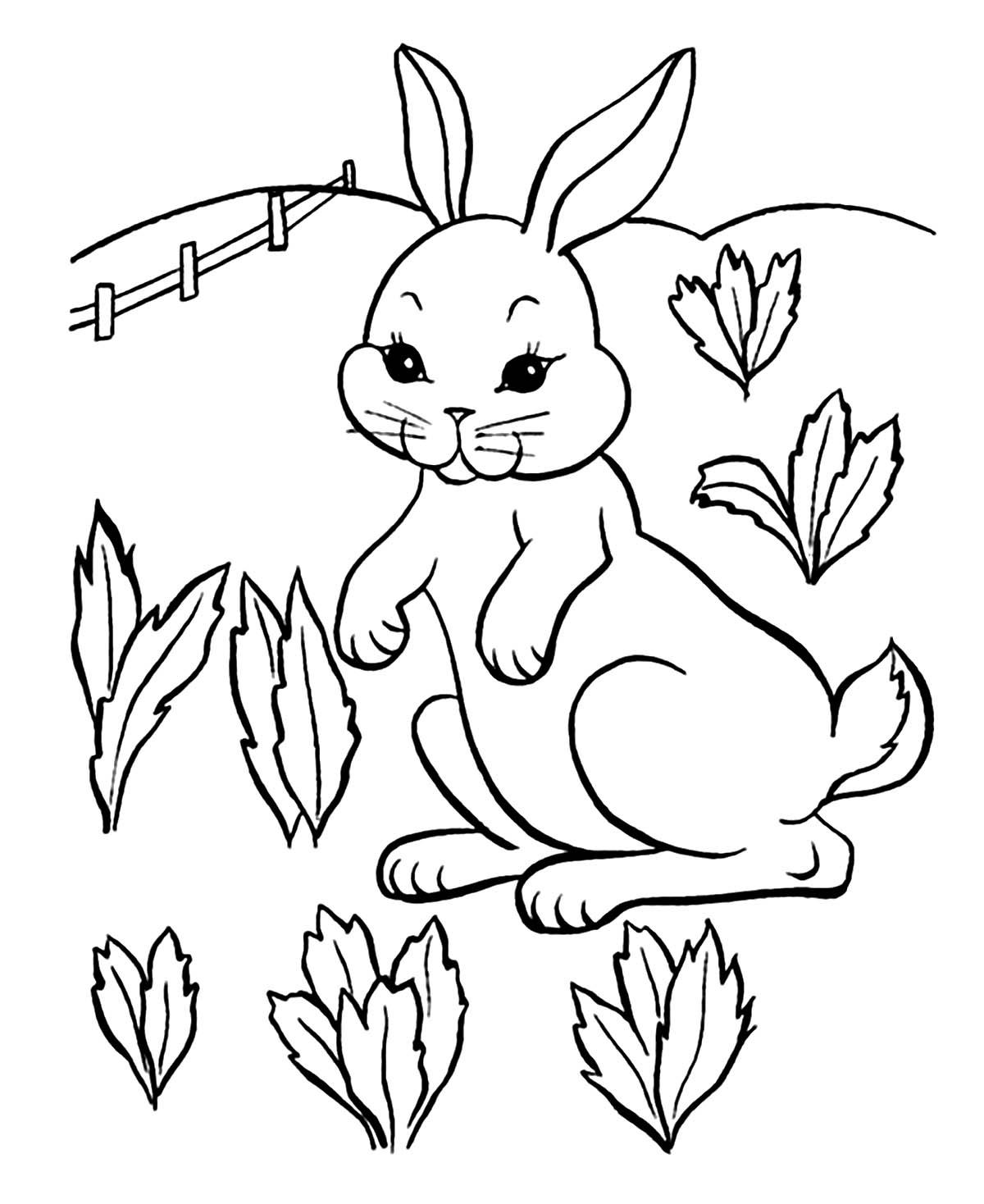 Ce lapin est sur le point de se régaler dans le champ de carottes.