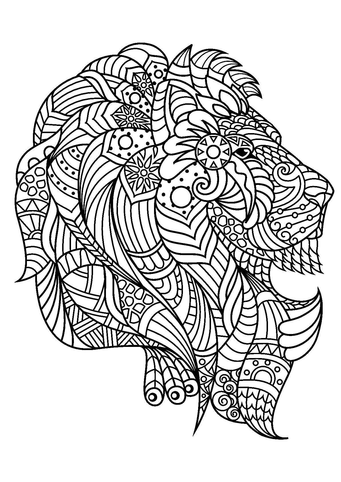 Tête De Lion De Profil Coloriage De Lions Coloriages