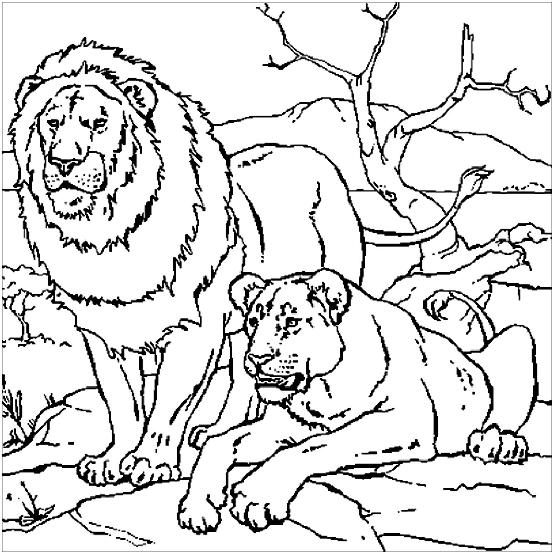 Tête de lion de profil - Coloriage de lions - Coloriages ...