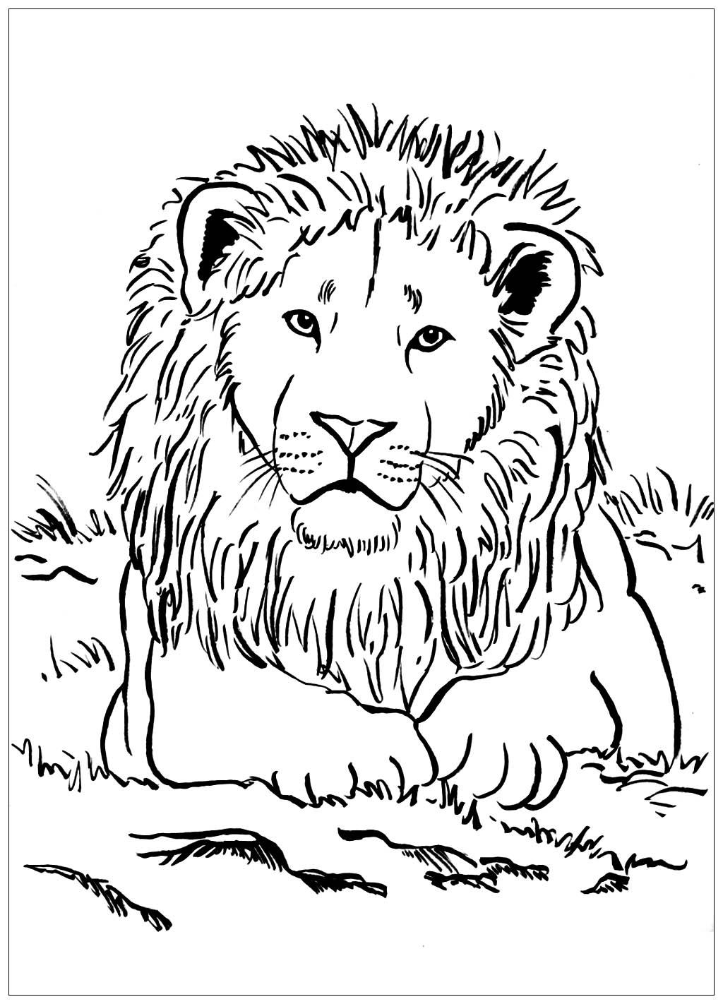 Lion allongé - Coloriage de lions - Coloriages pour enfants