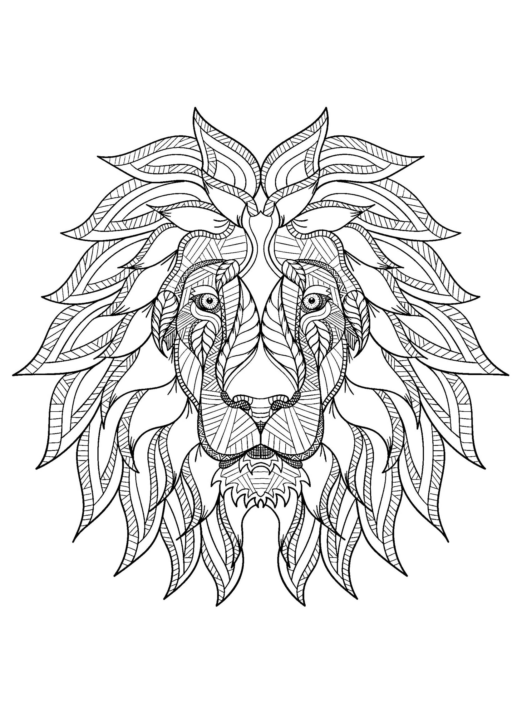 T 234 Te De Lion De Face Coloriage De Lions Coloriages