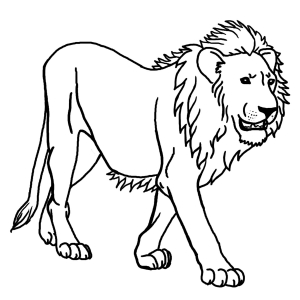 Coloriage lion 2