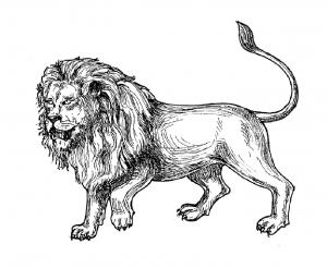 Coloriage lion afrique