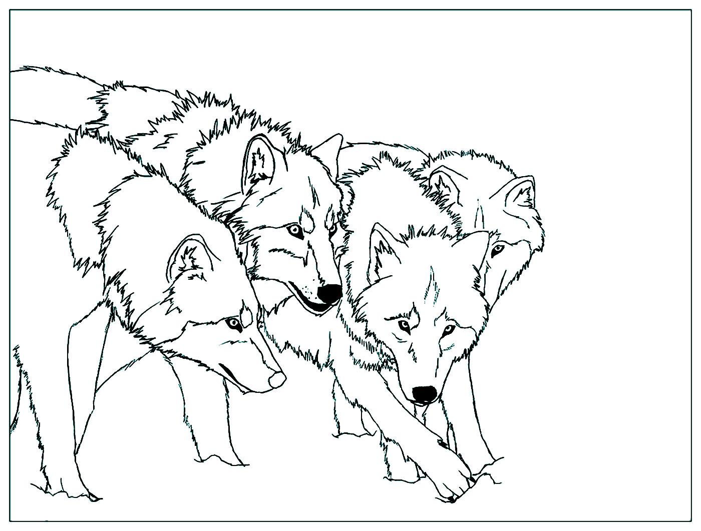 Cette meute de loup vous attend !