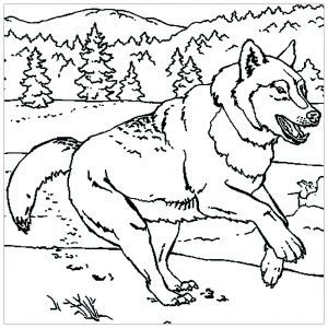 Loup qui court