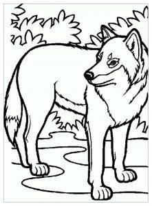 Enfant loup