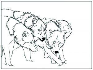 Meute de loup