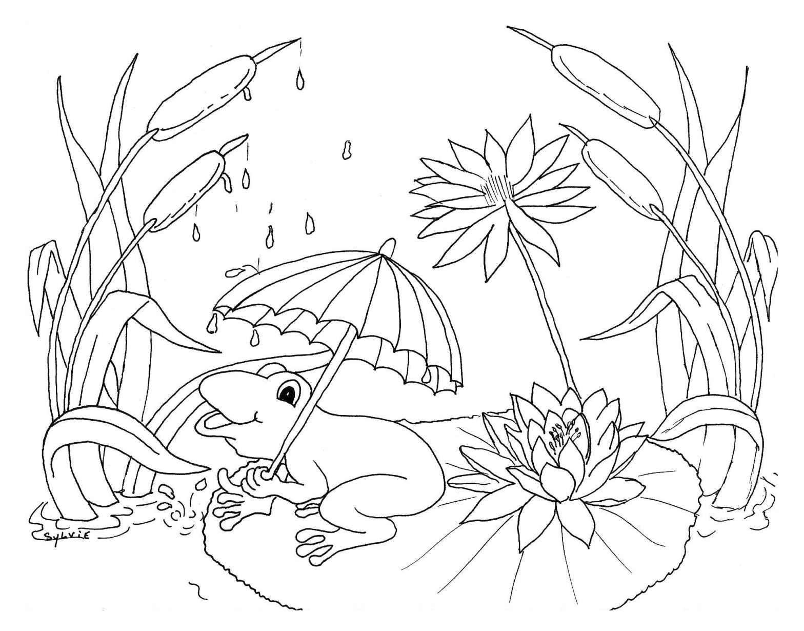 Grenouille et pluie coloriage m t o coloriages pour enfants - Coloriage de grenouille ...